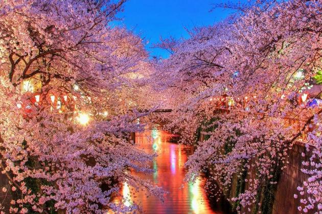 Các công viên đẹp quyến rũ ở Tokyo